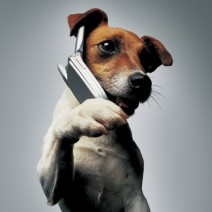 Dog_on_Phone.jpg